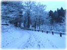 Winter 2014_29